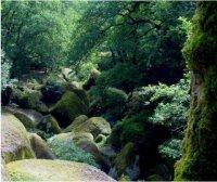Huelgoat Forest