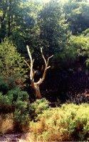 Paimpont Forest