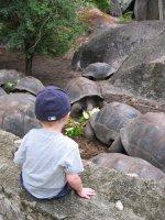 Seychelles giant sea turtles