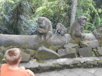 Monkey Jungle, Ubud, Bali