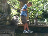 Bali Monkey Sanctuary