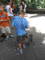 Monkey Jungle, Ubud, Bali