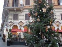 Panella, Rome, Italy