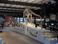 Brussles Museum of Natural History, belgium