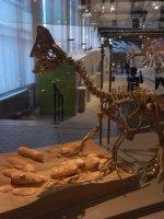 Brussels Museum of Natural Sciences, Belgium