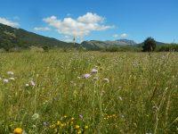 Mountain biking, Ovindoli, Abruzzo