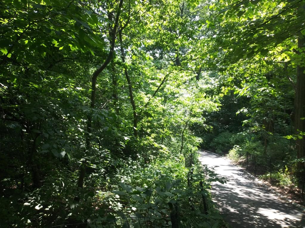 Central Park North Woods / Kimberly Sullivan