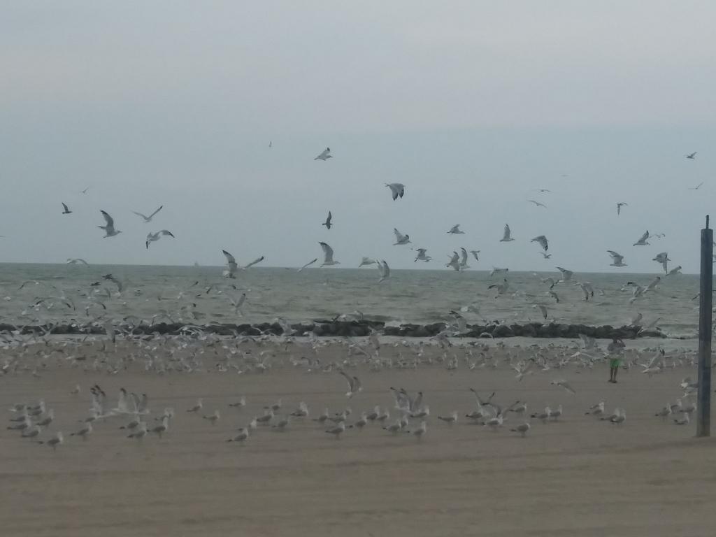 Maumee Bay, Lake Erie, Ohio / Kimberly Sullivan
