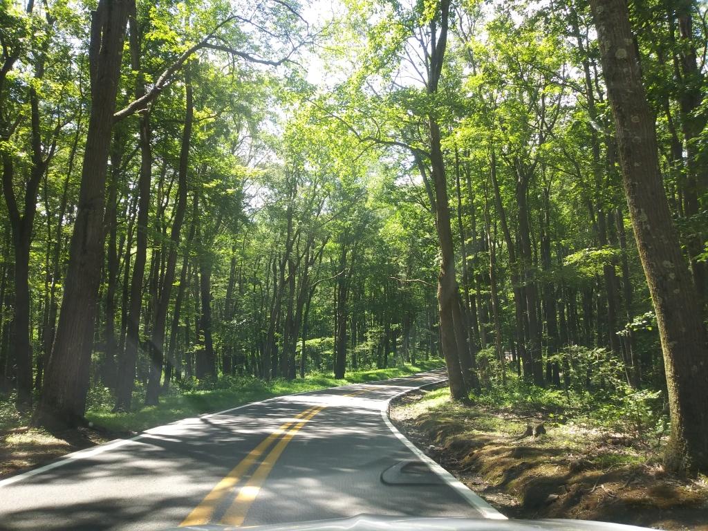 Cooper National Forest, West Virginia / Kimberly Sullivan
