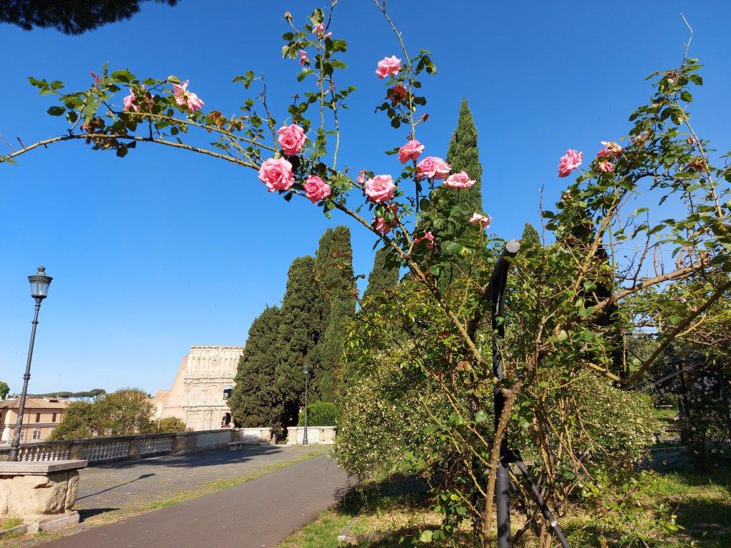 Rose Garden, Rome, Italy/ Kimberly Sullivan